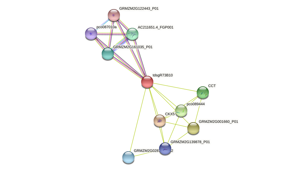 GRMZM2G373607_P01 protein (Zea mays) - STRING interaction network