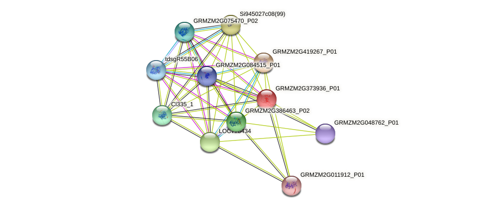 GRMZM2G373936_P01 protein (Zea mays) - STRING interaction network