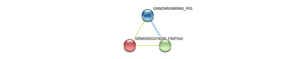 GRMZM2G374030_P01 protein (Zea mays) - STRING interaction network