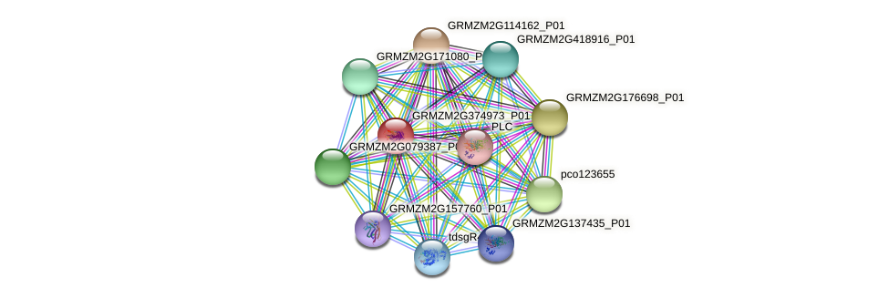 GRMZM2G374973_P01 protein (Zea mays) - STRING interaction network