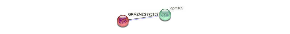 GRMZM2G375159_P01 protein (Zea mays) - STRING interaction network