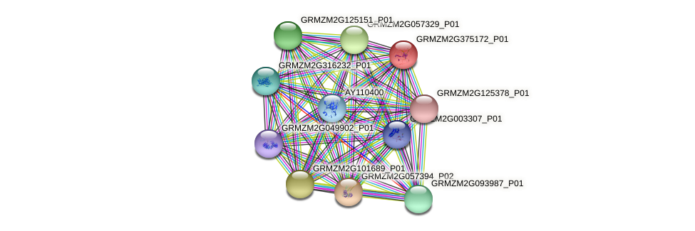 GRMZM2G375172_P01 protein (Zea mays) - STRING interaction network