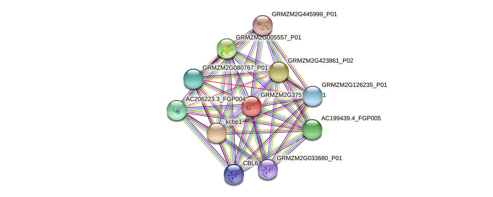 GRMZM2G375782_P01 protein (Zea mays) - STRING interaction network