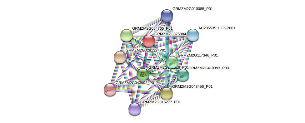 Zm.73751 protein (Zea mays) - STRING interaction network