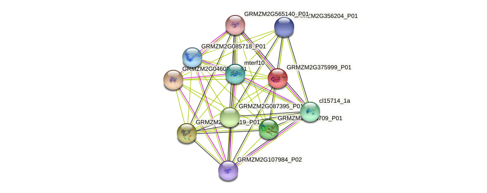 GRMZM2G375999_P01 protein (Zea mays) - STRING interaction network