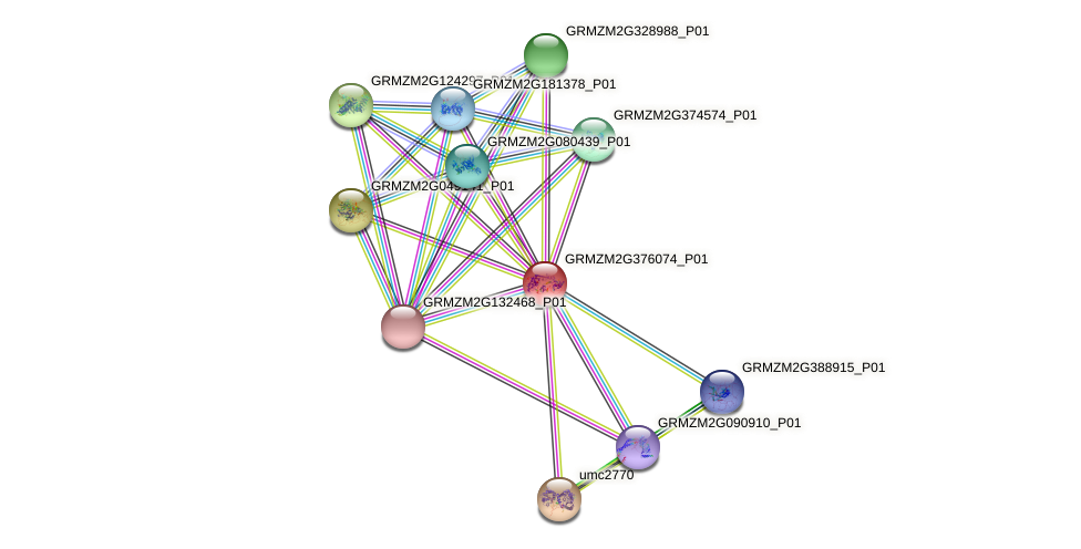 GRMZM2G376074_P01 protein (Zea mays) - STRING interaction network