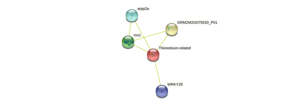 GRMZM2G376927_P01 protein (Zea mays) - STRING interaction network