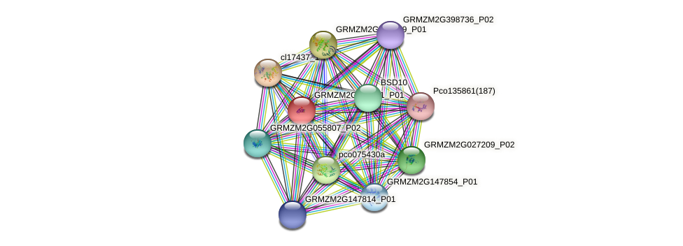 GRMZM2G377311_P01 protein (Zea mays) - STRING interaction network