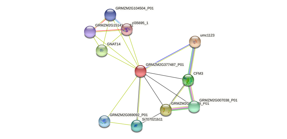 GRMZM2G377487_P01 protein (Zea mays) - STRING interaction network
