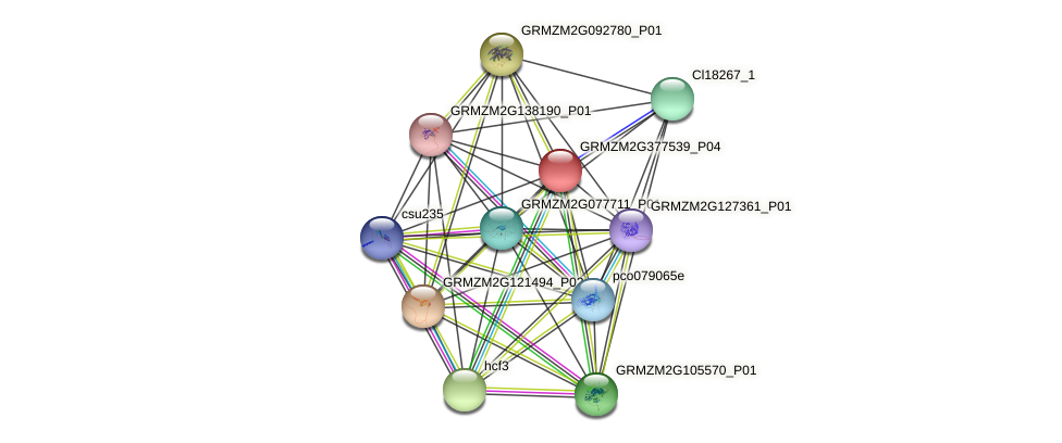 GRMZM2G377539_P04 protein (Zea mays) - STRING interaction network