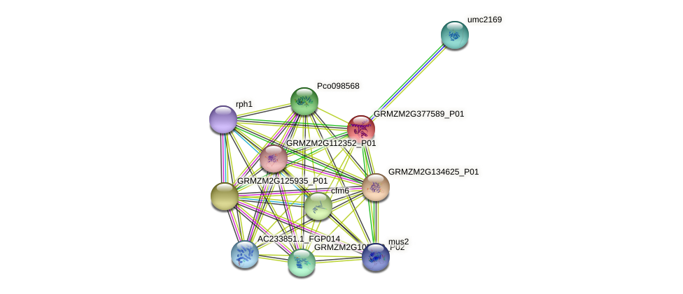 GRMZM2G377589_P01 protein (Zea mays) - STRING interaction network
