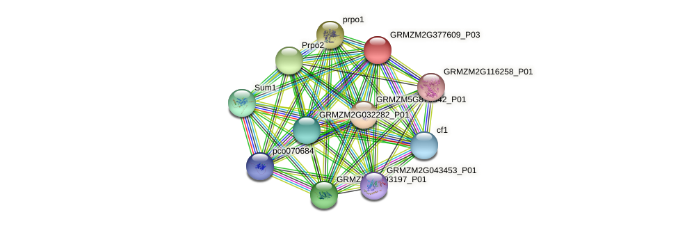 GRMZM2G377609_P03 protein (Zea mays) - STRING interaction network