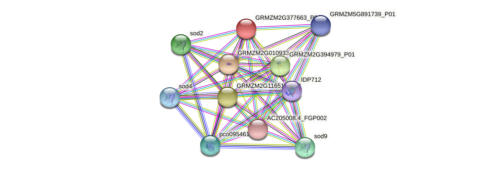 GRMZM2G377663_P01 protein (Zea mays) - STRING interaction network