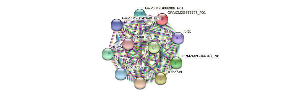 GRMZM2G377797_P01 protein (Zea mays) - STRING interaction network