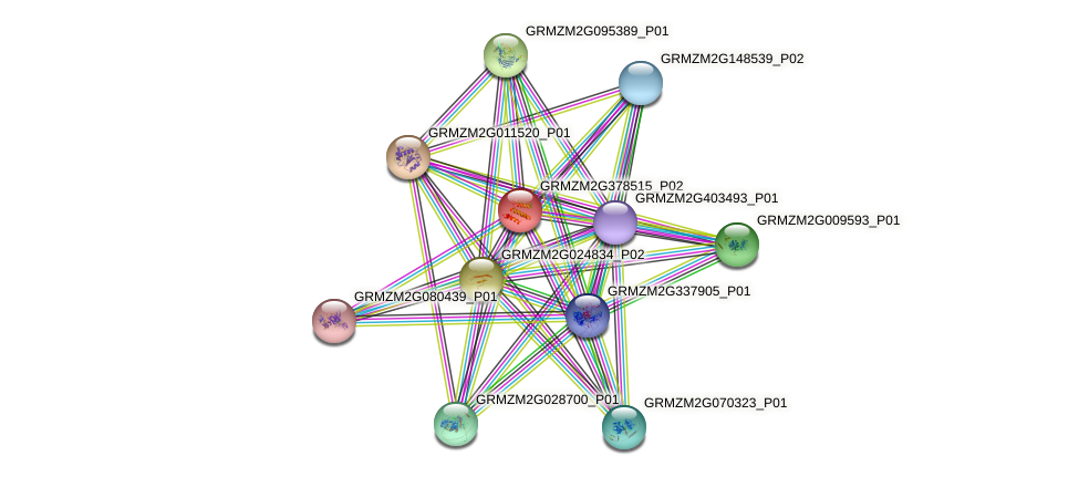GRMZM2G378515_P02 protein (Zea mays) - STRING interaction network