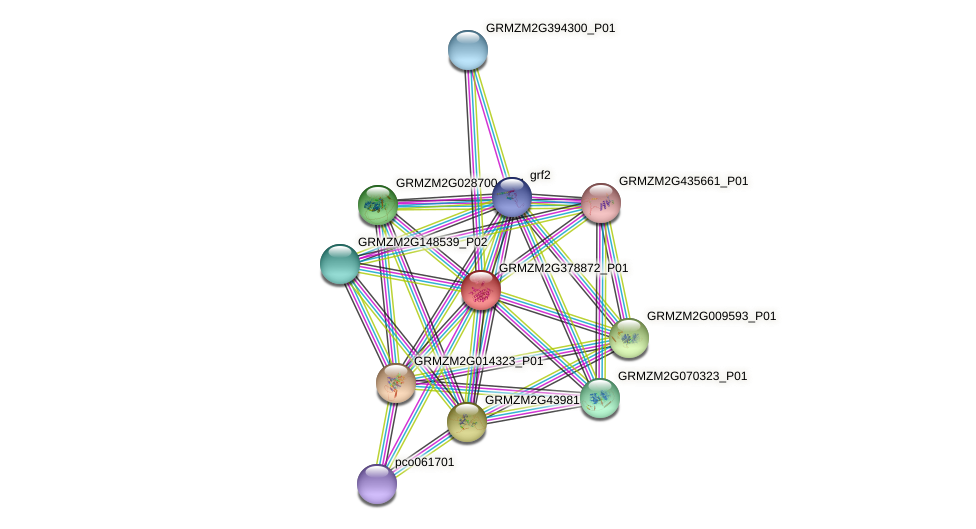 GRMZM2G378872_P01 protein (Zea mays) - STRING interaction network