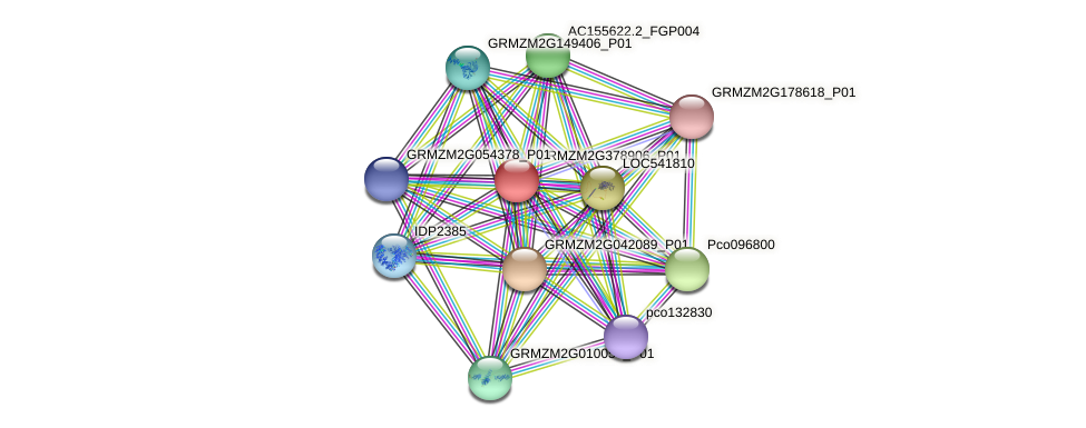 GRMZM2G378906_P01 protein (Zea mays) - STRING interaction network