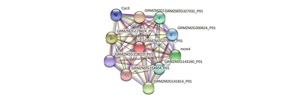 GRMZM2G379550_P01 protein (Zea mays) - STRING interaction network