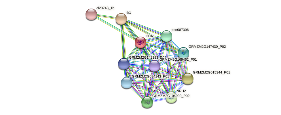 Zm.43459 protein (Zea mays) - STRING interaction network