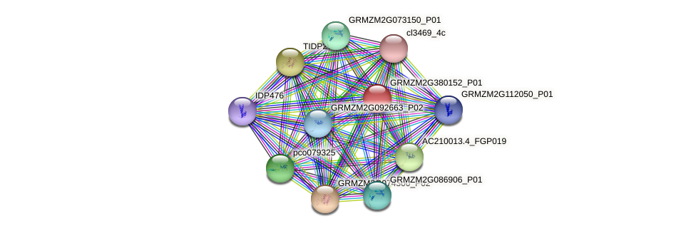 GRMZM2G380152_P01 protein (Zea mays) - STRING interaction network