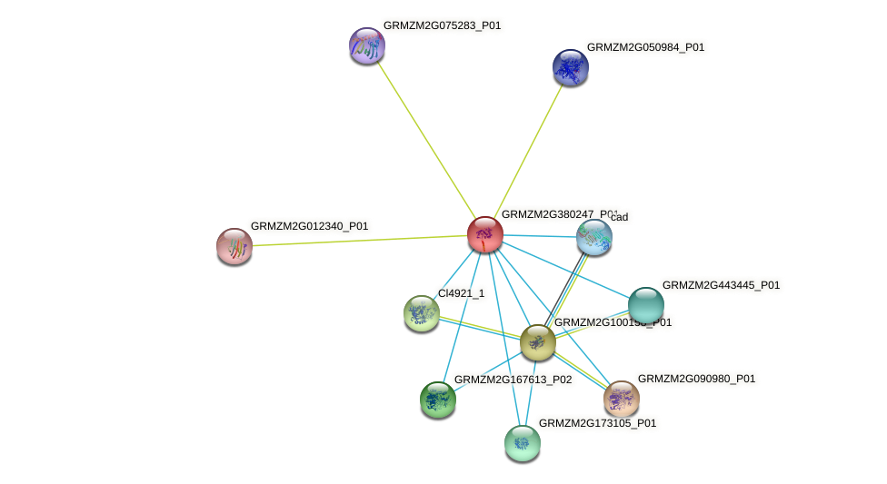 GRMZM2G380247_P01 protein (Zea mays) - STRING interaction network