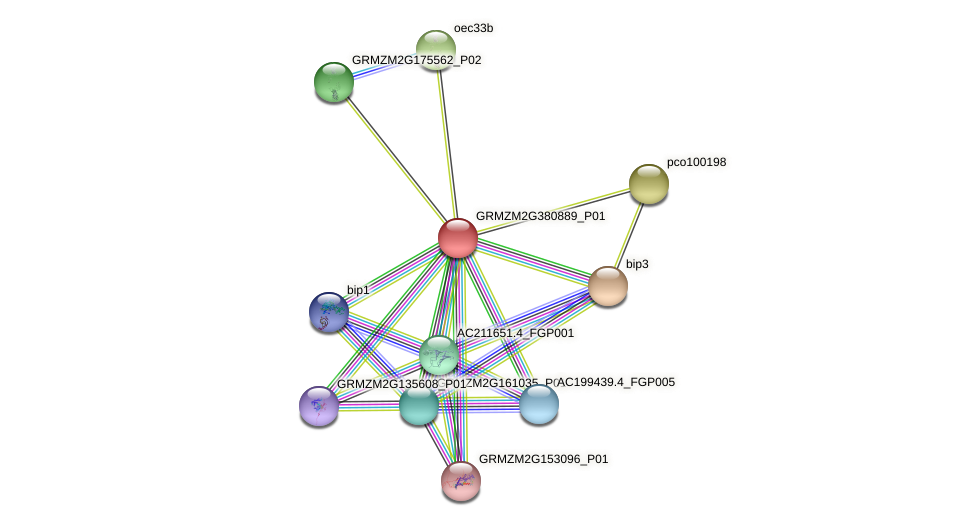 GRMZM2G380889_P01 protein (Zea mays) - STRING interaction network