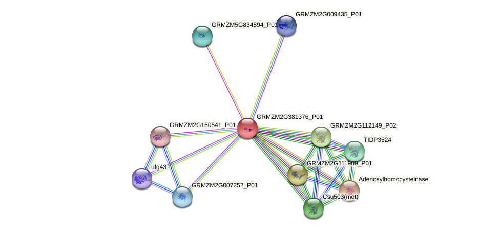GRMZM2G381376_P01 protein (Zea mays) - STRING interaction network