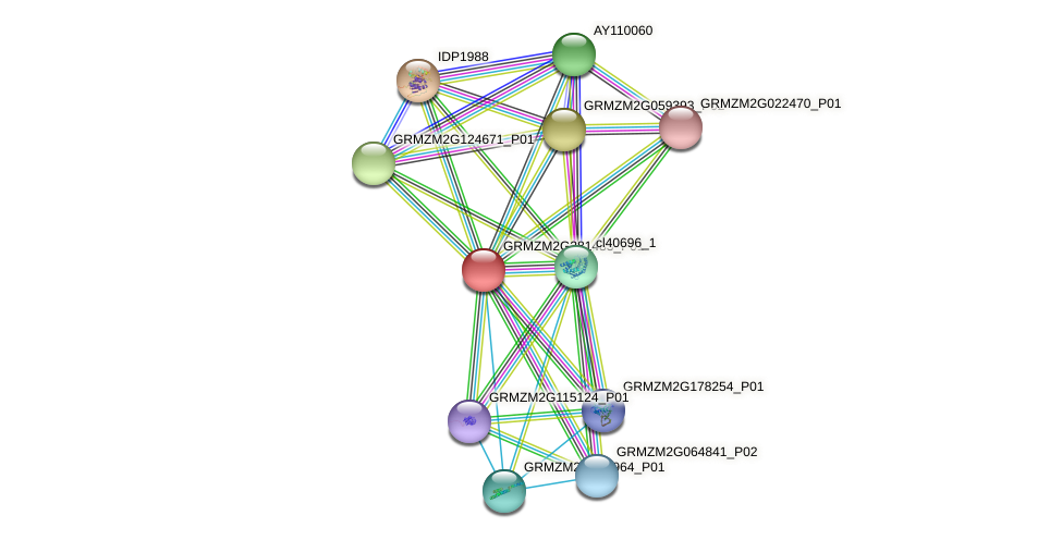 GRMZM2G381483_P01 protein (Zea mays) - STRING interaction network