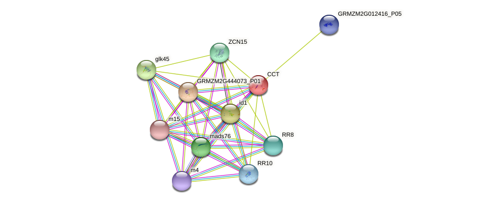 CCT protein (Zea mays) - STRING interaction network