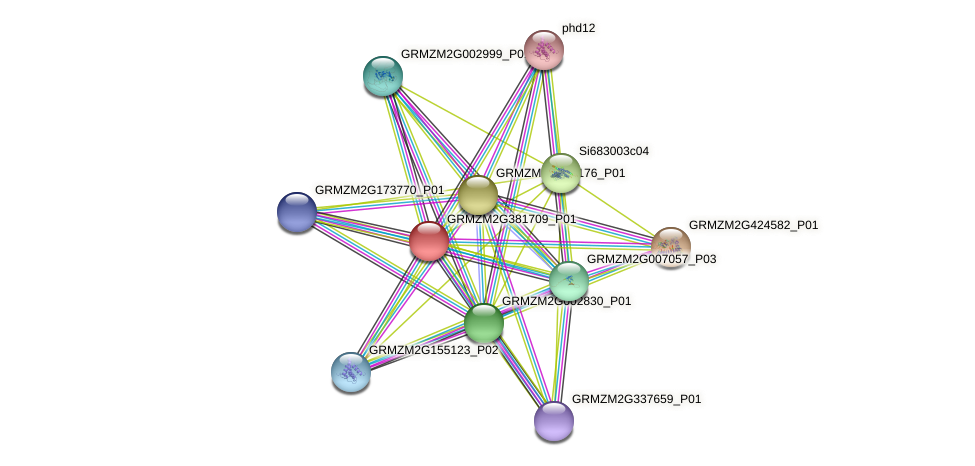 GRMZM2G381709_P01 protein (Zea mays) - STRING interaction network