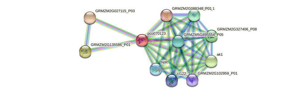 pco070123 protein (Zea mays) - STRING interaction network