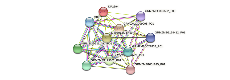 IDP2594 protein (Zea mays) - STRING interaction network
