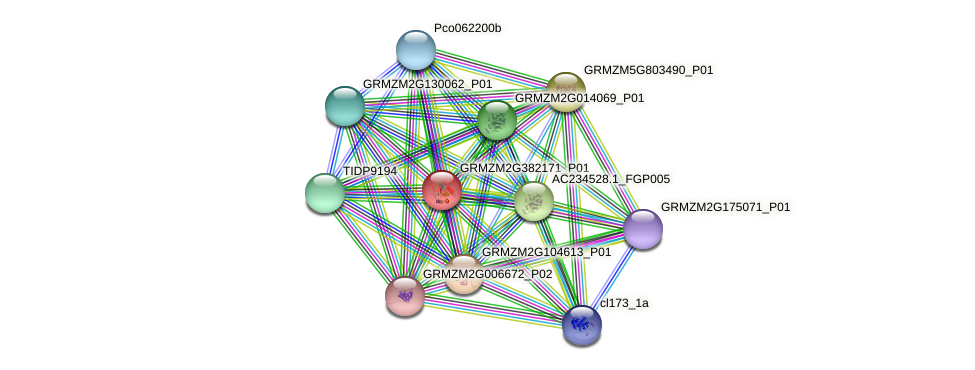GRMZM2G382171_P01 protein (Zea mays) - STRING interaction network