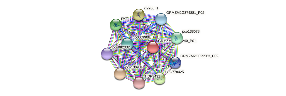 GRMZM2G382240_P01 protein (Zea mays) - STRING interaction network