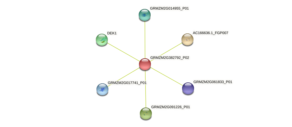 GRMZM2G382792_P02 protein (Zea mays) - STRING interaction network