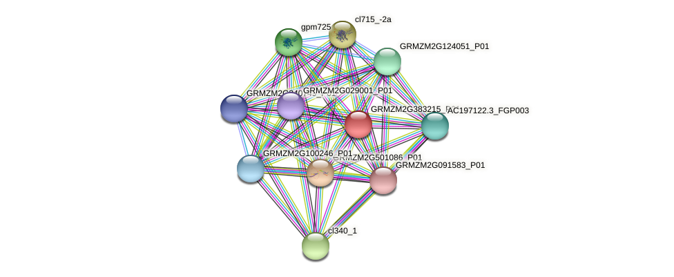GRMZM2G383215_P01 protein (Zea mays) - STRING interaction network