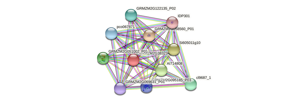 GRMZM2G383234_P01 protein (Zea mays) - STRING interaction network