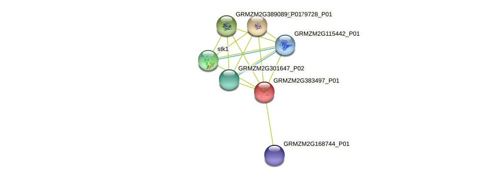 GRMZM2G383497_P01 protein (Zea mays) - STRING interaction network
