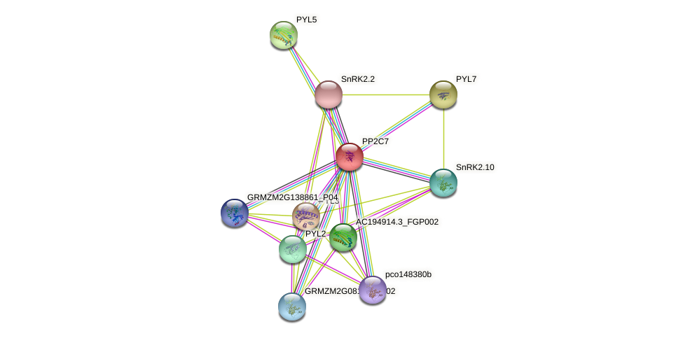 PP2C7 protein (Zea mays) - STRING interaction network