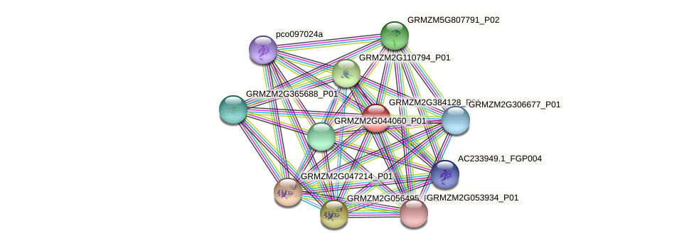 GRMZM2G384128_P01 protein (Zea mays) - STRING interaction network
