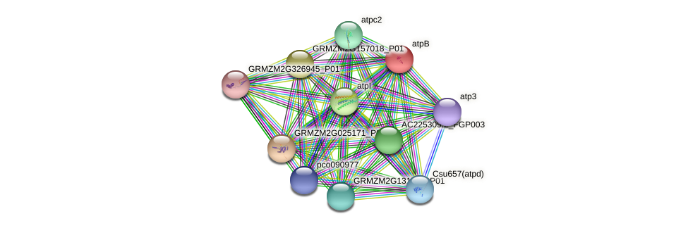 GRMZM2G385622_P01 protein (Zea mays) - STRING interaction network