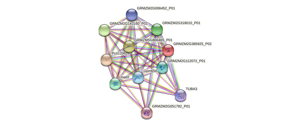 GRMZM2G385925_P02 protein (Zea mays) - STRING interaction network