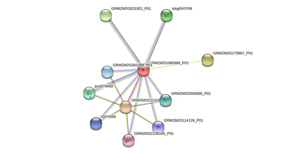 GRMZM2G385989_P01 protein (Zea mays) - STRING interaction network