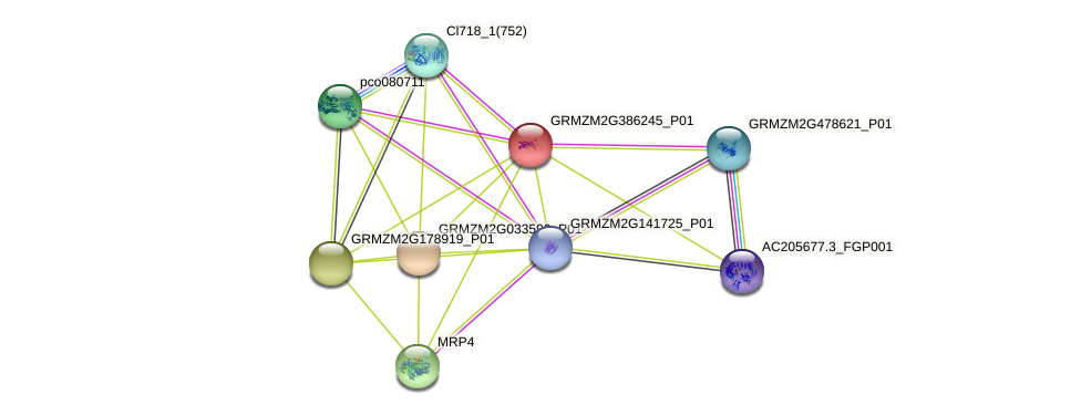 GRMZM2G386245_P01 protein (Zea mays) - STRING interaction network