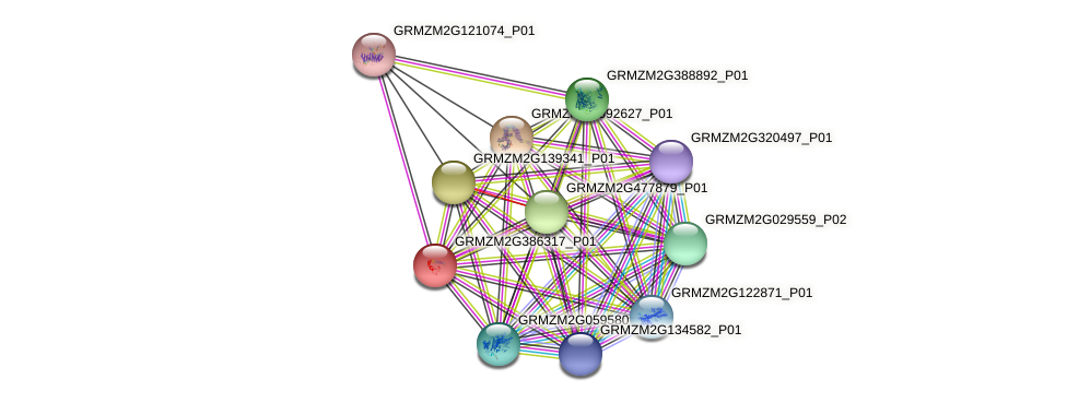 GRMZM2G386317_P01 protein (Zea mays) - STRING interaction network