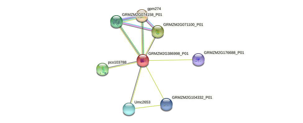 GRMZM2G386998_P01 protein (Zea mays) - STRING interaction network
