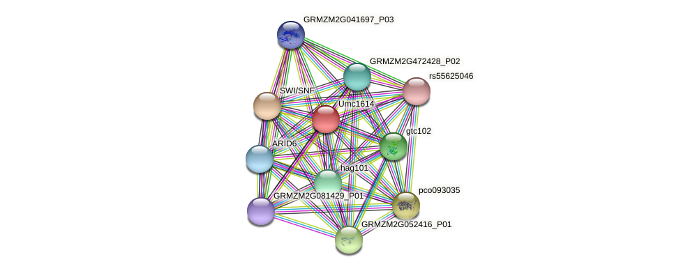 GRMZM2G387890_P01 protein (Zea mays) - STRING interaction network