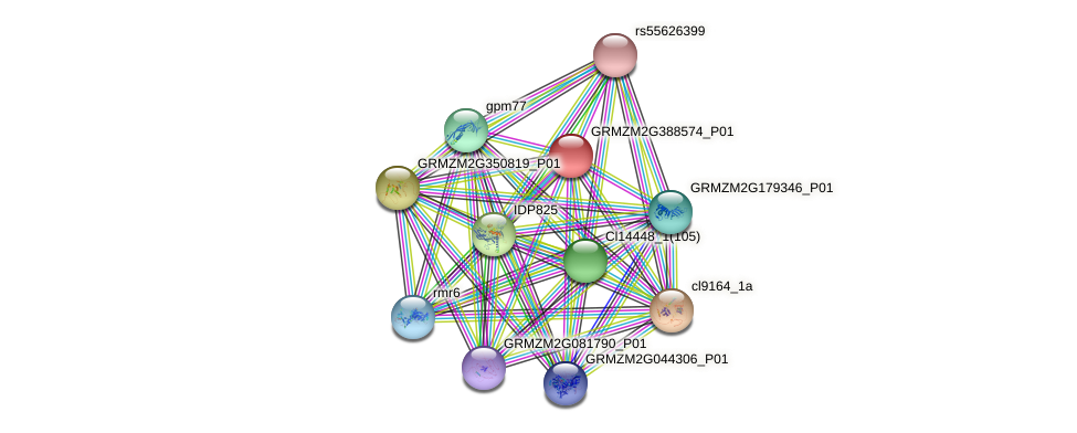 GRMZM2G388574_P01 protein (Zea mays) - STRING interaction network