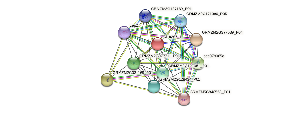 GRMZM2G388855_P01 protein (Zea mays) - STRING interaction network