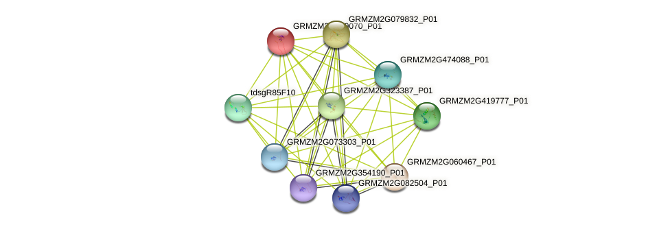 GRMZM2G389070_P01 protein (Zea mays) - STRING interaction network